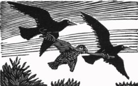 wood-engraving print: Parrot and Daws for The Bird Talisman